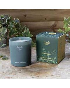 Herb Dublin Buttercup Baby Candle Boxed